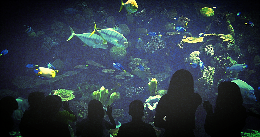 Columbus Zoo And Aquarium Is A Perfect Weekend Expedition