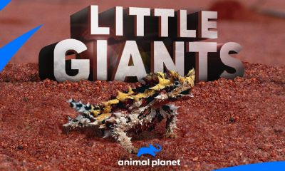 Little Giants - Animal Planet